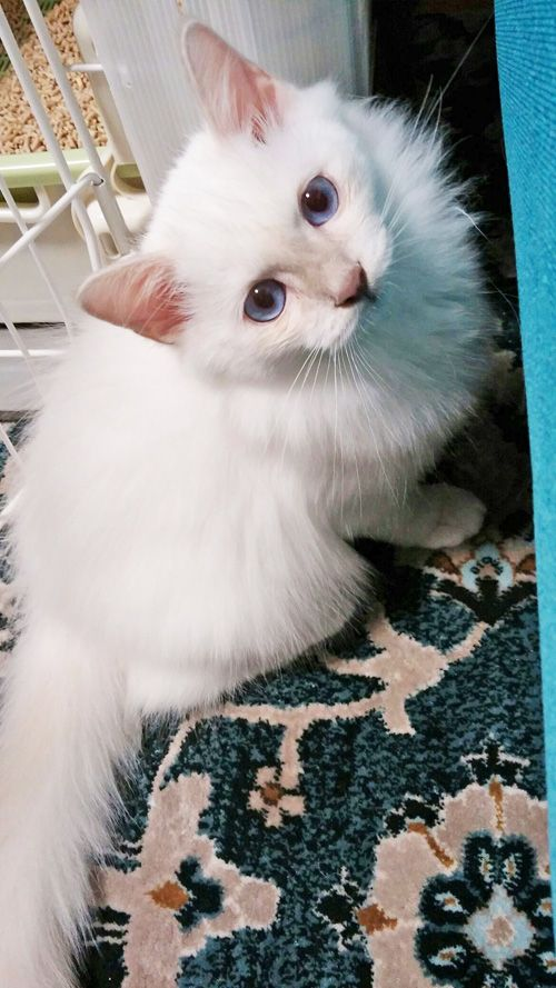 里親さんブログ可愛いましゅ君♪ - http://iyaiyahajimeru.jp/cat/archives/66882