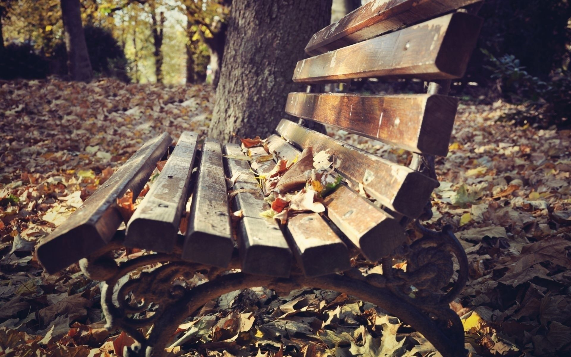 #1696838, bench category - Pretty bench pic