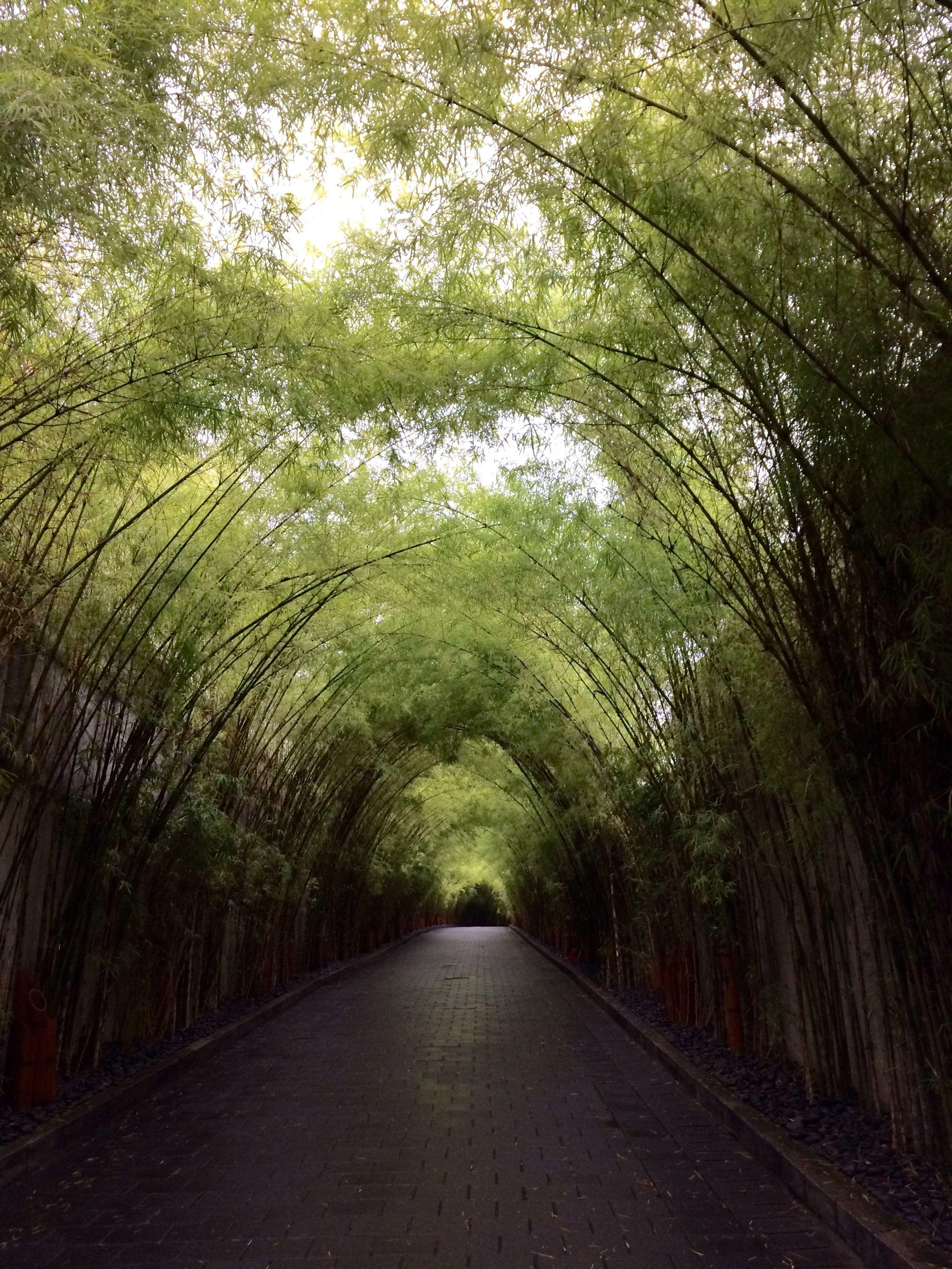 Bamboo Driveway Bali, Indonesia Tropical garden, Fenced