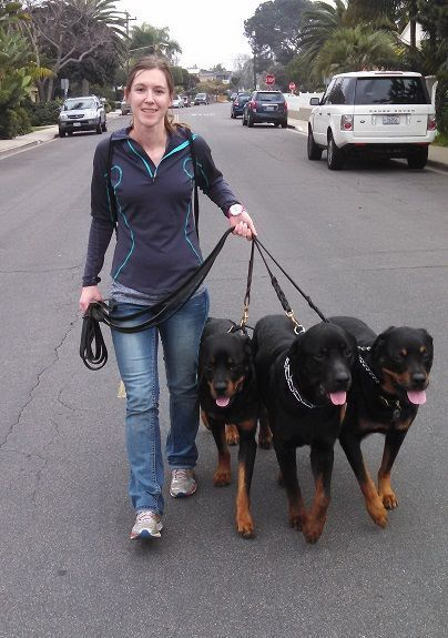"Walking three Rotties. Please don't say ""Who's walking who?"""