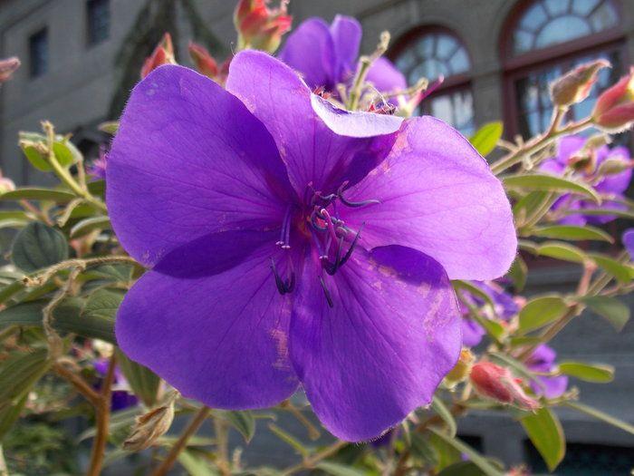 Big purple flower by andrew stack on capture washington beautiful big purple flower by andrew stack on capture washington beautiful flower at the ballard mightylinksfo