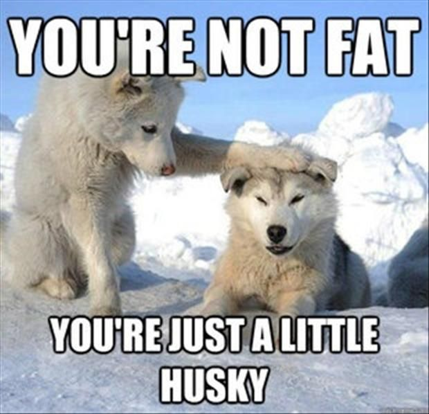 Fantastic Wolfbear Chubby Adorable Dog - 009bb7e33cd04f1320b4f011983dc10e  Snapshot_714013  .jpg
