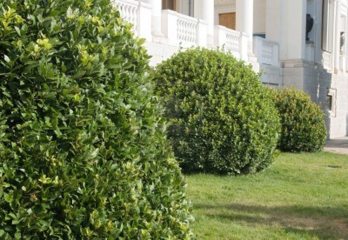 Types Of Bushes Review Landscape Design House Yard