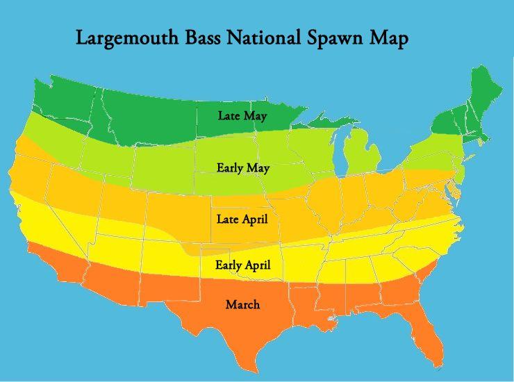 Largemouth Bass National Spawn Map Bass Fishing Bass