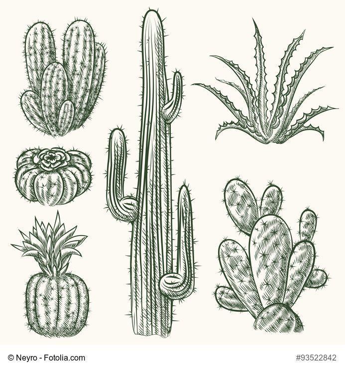 Résultat de recherche dimages pour dessins cactus d39images Anzahl der