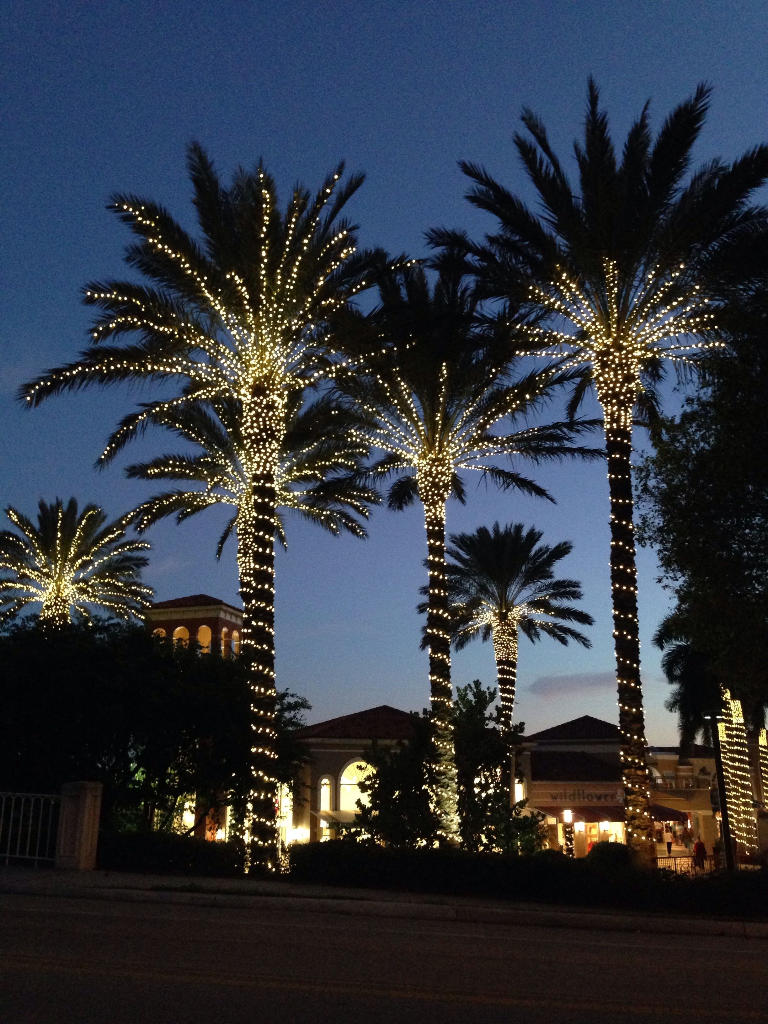 Lights on Palm trees. | Outdoor christmas lights, Palm ...