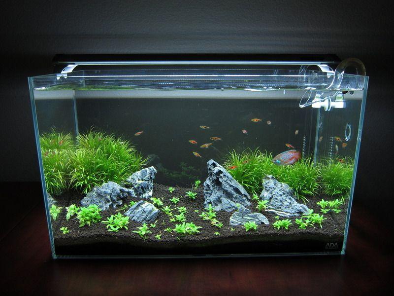 60p Iwagumi First Try Nature Aquarium Fresh Water Fish Tank Aquarium