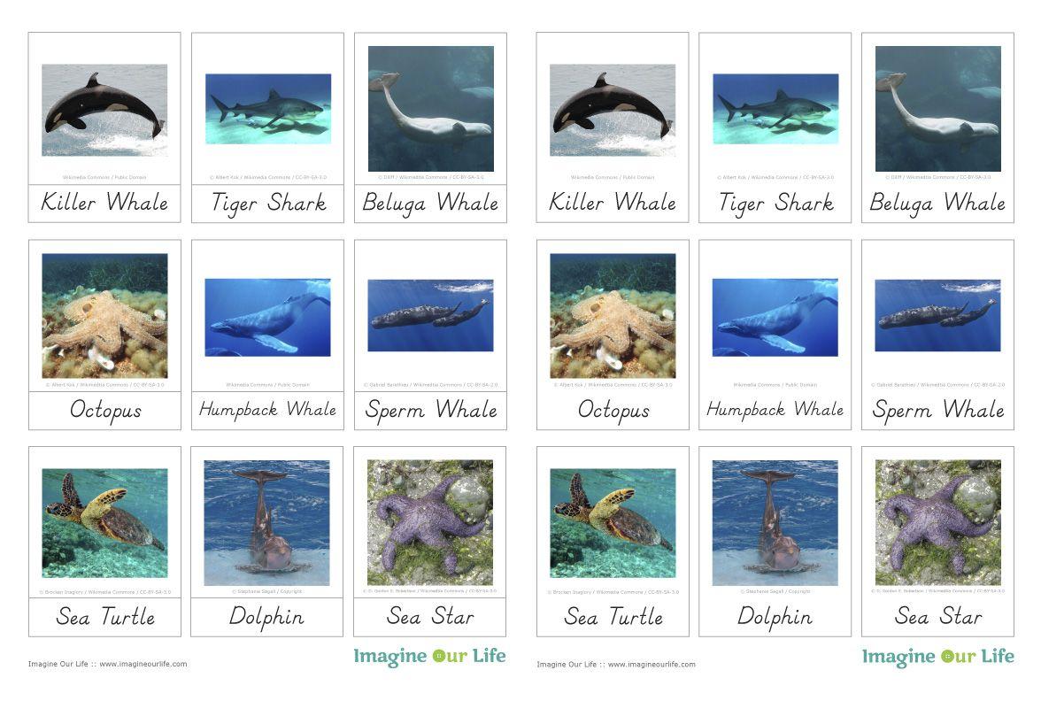 Montessori Ocean Animals 3 Part Cards