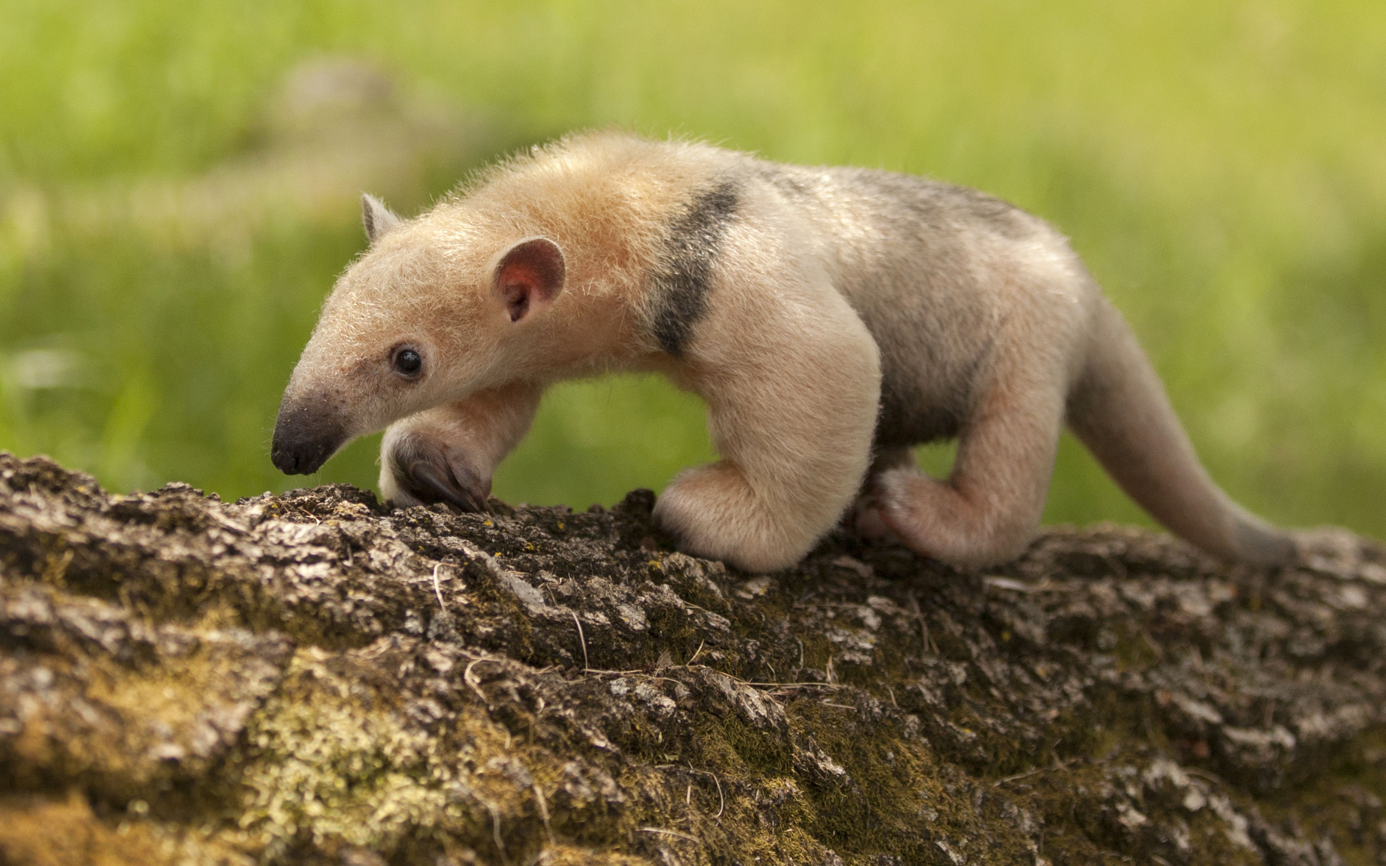 Pin by Odd Bunsen on cute animals Baby exotic animals