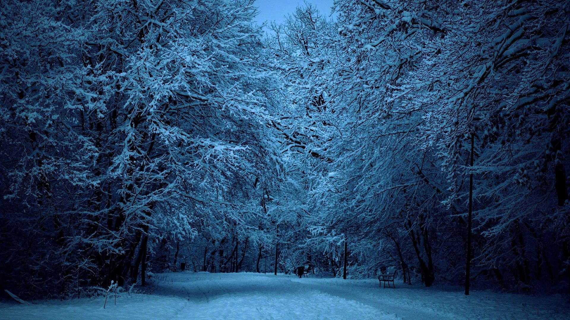 Winter Forest Night Image Click Wallpapers Winter Forest Winter Pictures Winter Trees