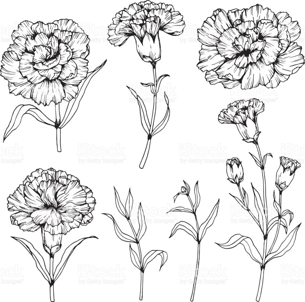 Image Result For Carnation Drawing Carnation Flower Tattoo Carnation Tattoo Flower Tattoo Sleeve