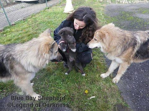 Nyx Nessa Et Leur Petite Soeur Blue Bay Shepherd Stella
