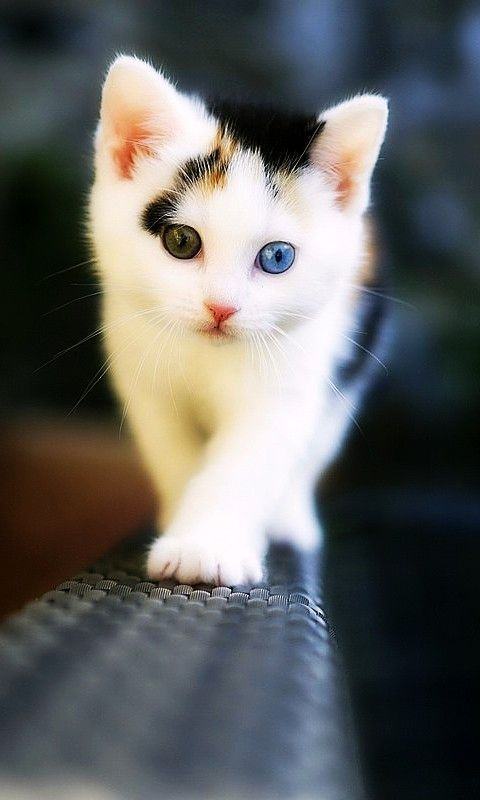 cute hd wallpapers for mobile 480x800 Baby cats, Kittens