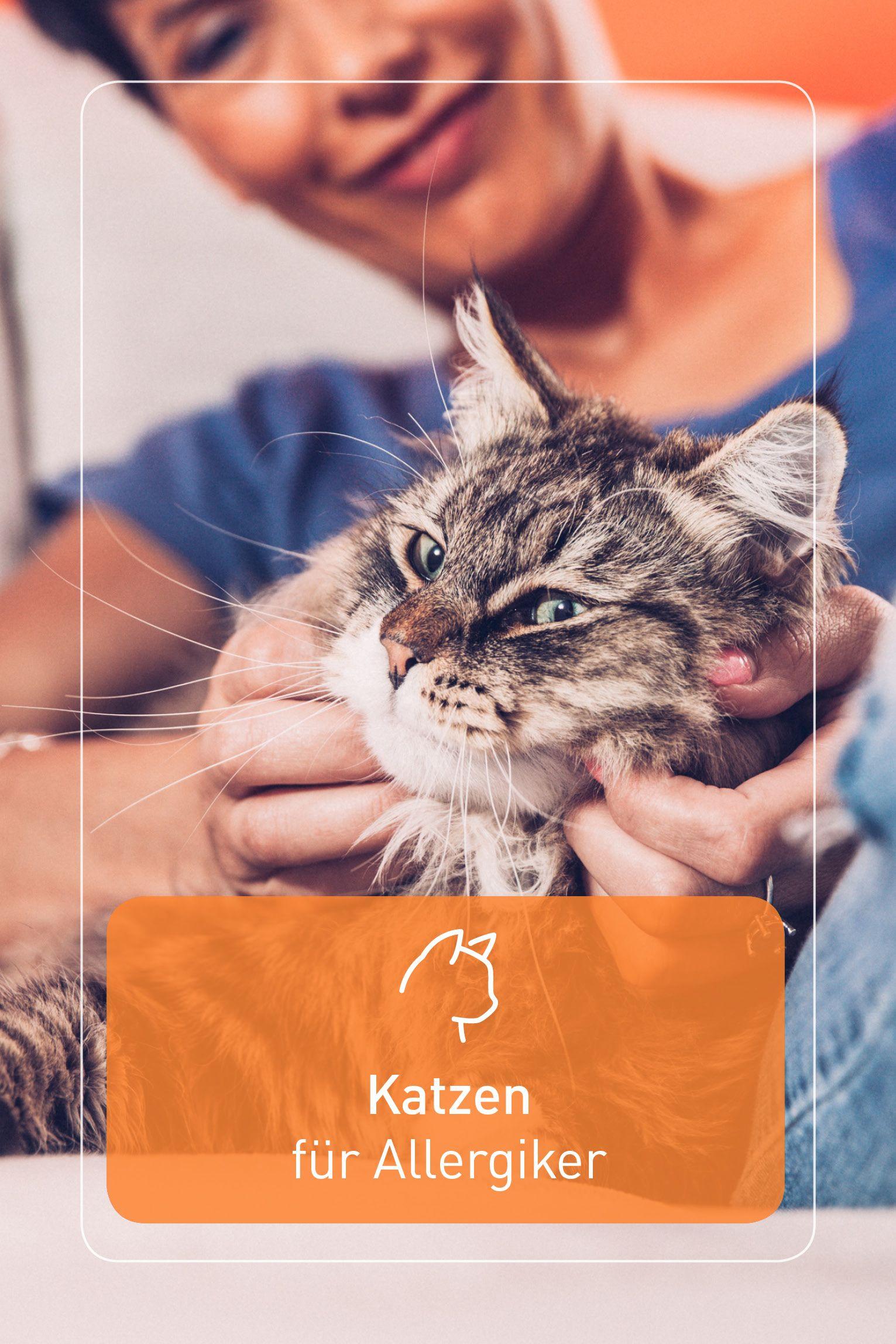 Aufatmen Trotz Stubentiger Konnen Auch Katzenhaarallergiker Die Frage Ist Nur Welche Katzenrasse Sich Am Besten Eign In 2020 Katzen Katzen Fur Allergiker Stubentiger