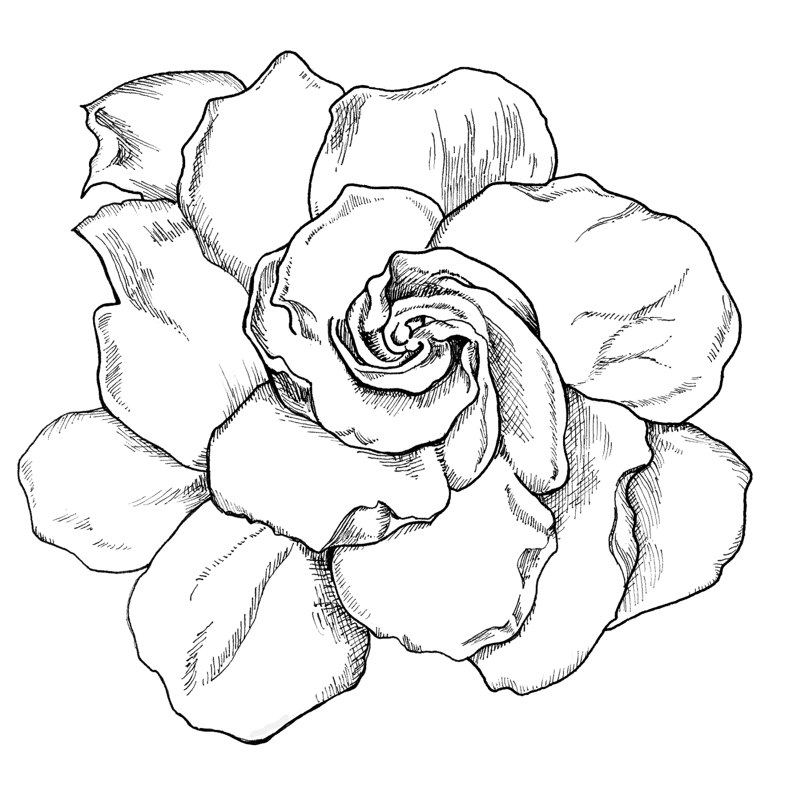 Line Art Picsart : Gardenia drawing live life creatively project