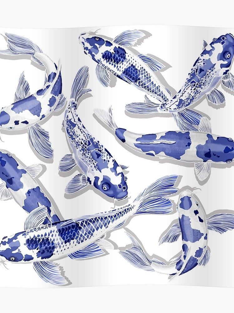 Blue and white Koi fish' Poster by rlnielsen4 in 2020 | Koi