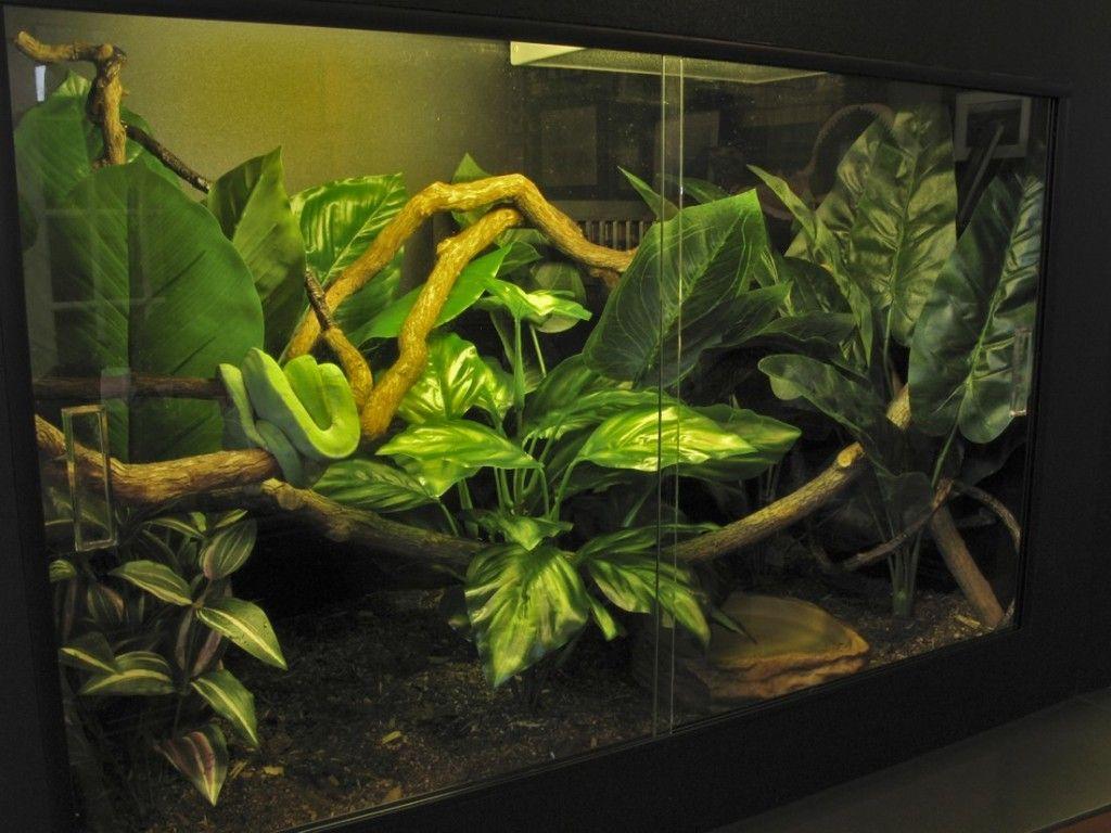 W x t x d u quick assembly snake cage pinterest vivarium