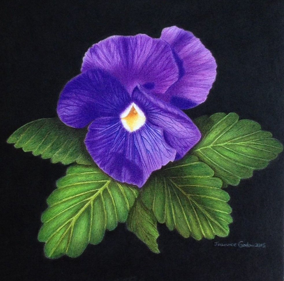 Purple Pansy Print Jeannicegordonart Pansies Purple Pansy Colored Pencils