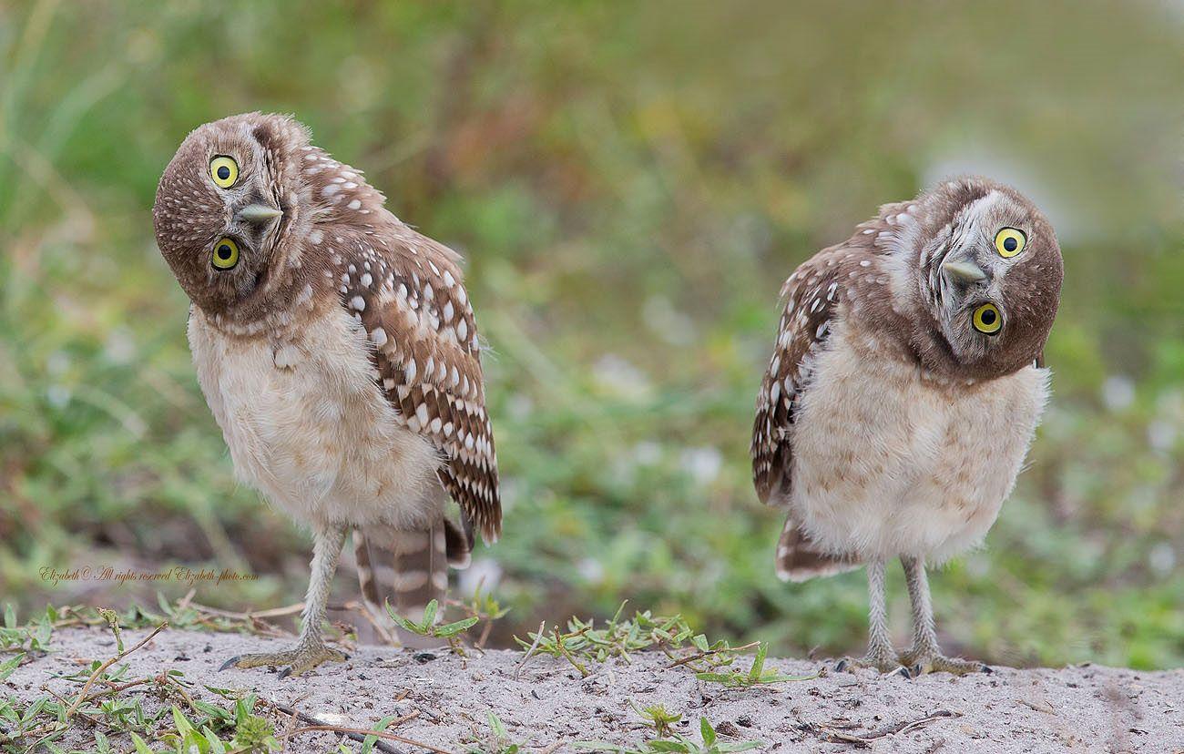 Смешные картинки две совы