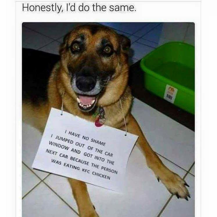 Not Many Dogs Wouldn T Kfc Dog Dogshaming Bnrbc Barksnrecbc