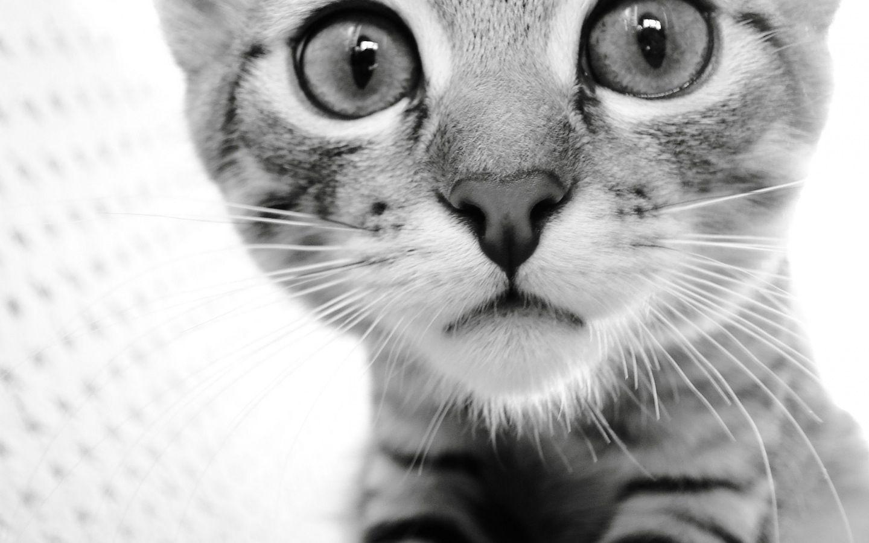 cute cat with big - photo #4