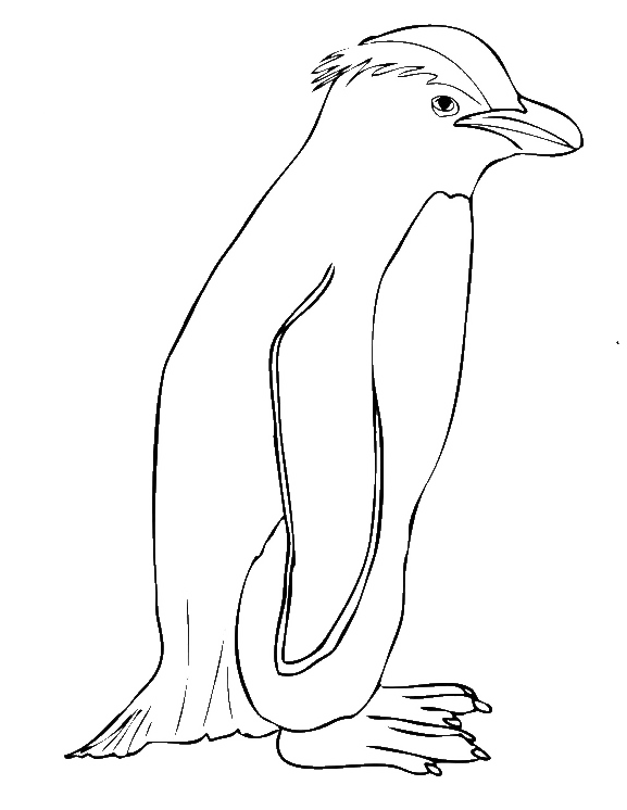 Line Drawings Of Endangered Animals : Species endangered penguin coloring pages