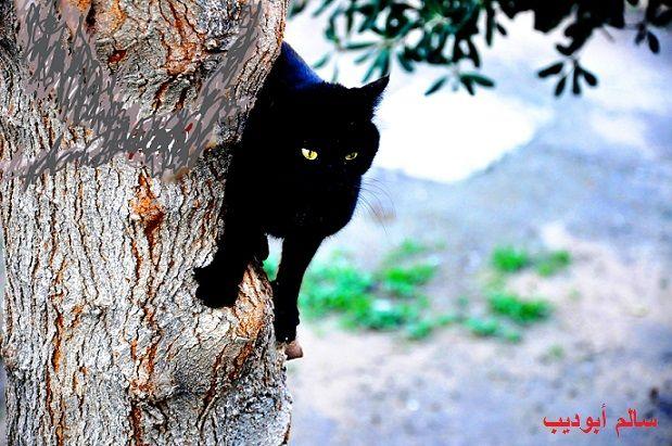 الصبر طيب Tripoli Animals Salem