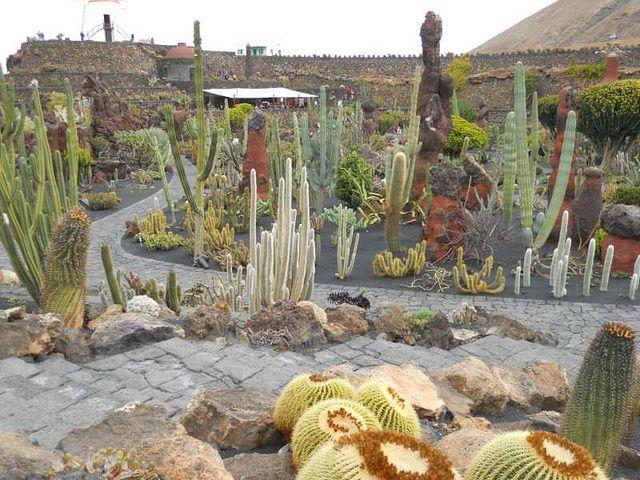 Jard n de cactus de c sar manrique en lanzarote - Jardines con cactus y piedras ...