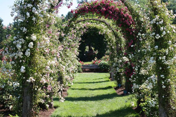 00a25ec723519134542e04502410509b - Famous Rose Gardens In The World