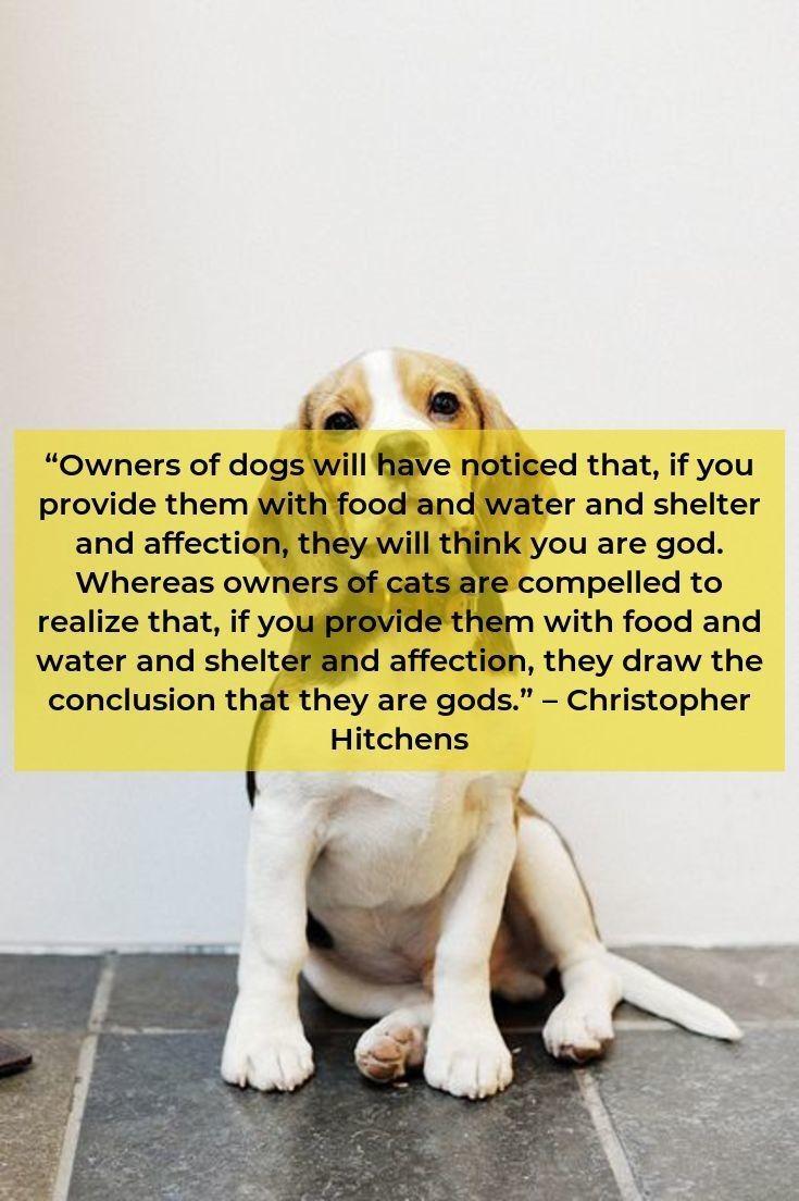 Beagle Dog Beaglelife Beagles Facts Beagle Pinterest Beagle