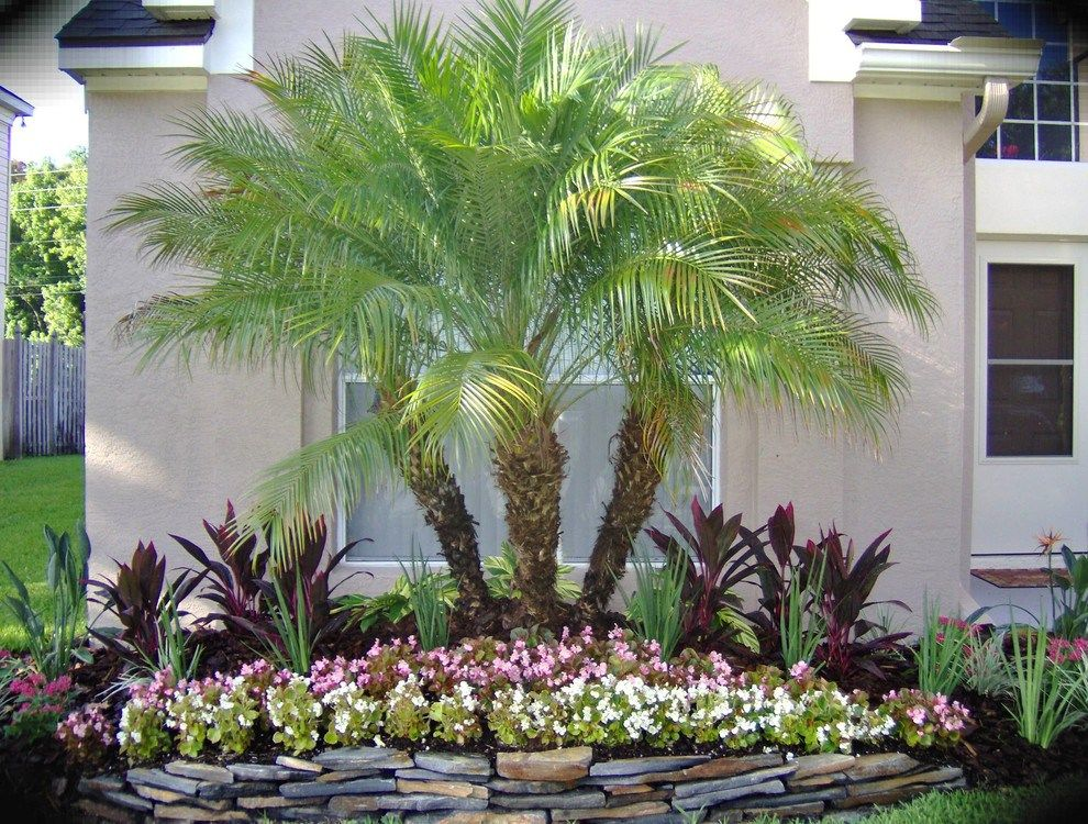 Pygmy Date Palm Spaces Orlando With Metal Trellises Front Yard Garden Design Tropical Landscaping Small Palm Trees