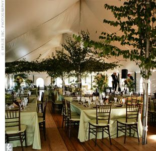 Spindly trees tied to tent supports and square tables & To achieve a look of rustic elegance the white cathedral tent was ...