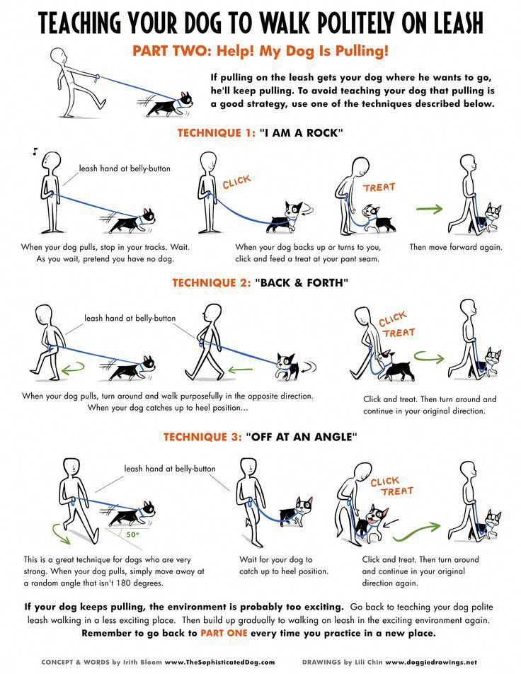 Teaching Your Dog To Walk Politely On Leash Part 2 Loose Leash Walking Dog Training Obedience Loose Leash