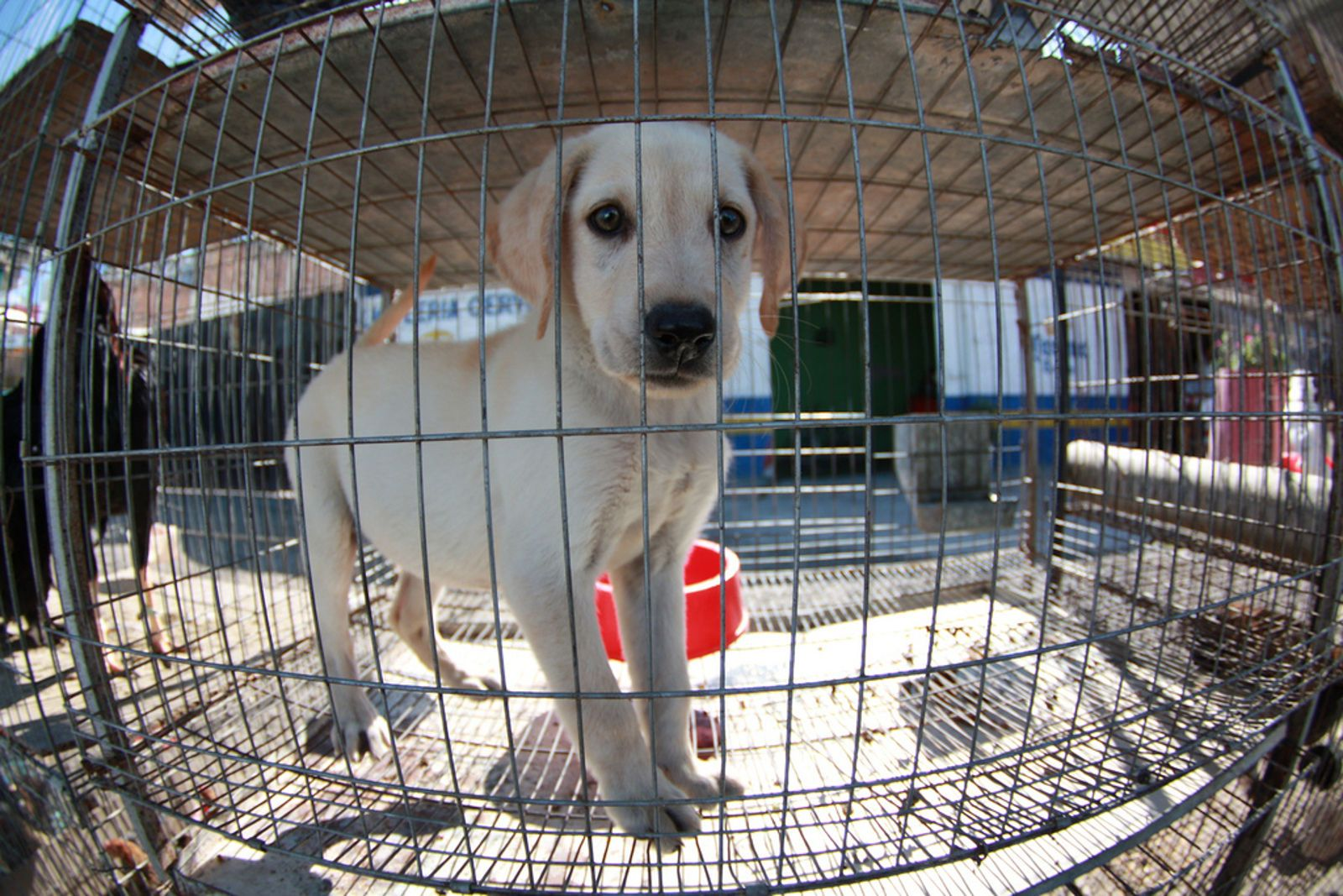 5 Things YOU Can Do to Help Stop Puppy Mills Puppy mills