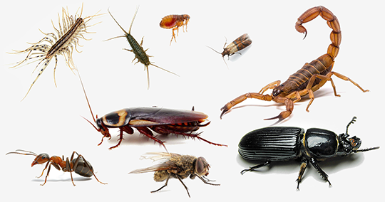 Professional Pest Control Services Also for You and You're