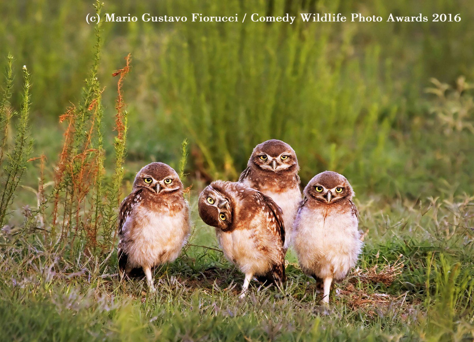 Finalists of the Comedy Wildlife Photography Awards