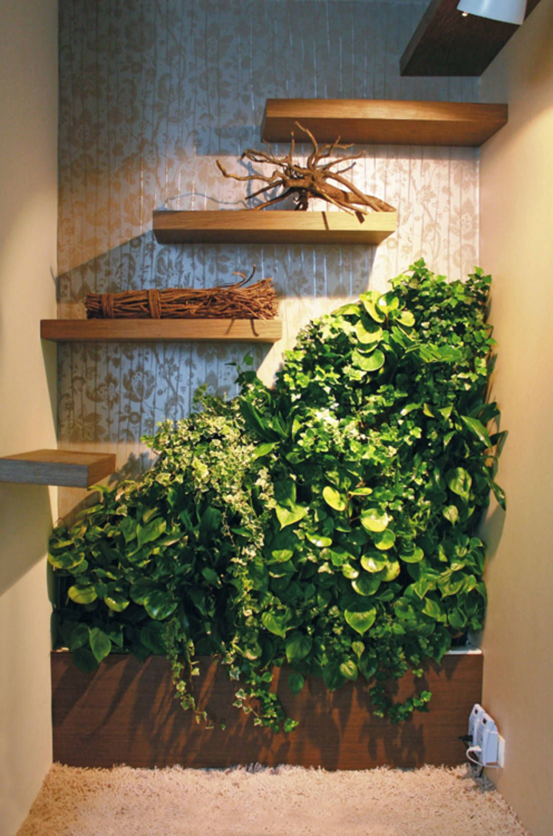 die besten zimmerpflanzen f r deine wohnung zimmerpflanzen pinterest pflanzen. Black Bedroom Furniture Sets. Home Design Ideas