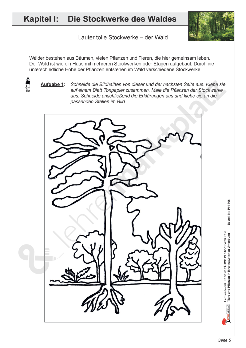 Die Stockwerke Des Waldes Unterrichtsmaterial Im Fach
