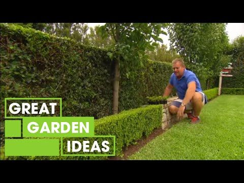 Tips Tricks For Perfect Hedging Gardening Great Home Ideas Youtube Hedges Diy Garden Gardening Photography