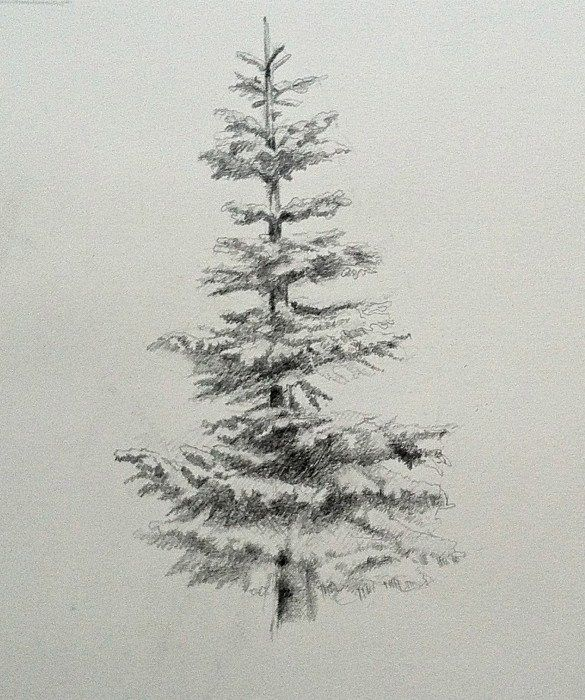 How To Draw And Paint Evergreen Trees Tree Drawings Pencil
