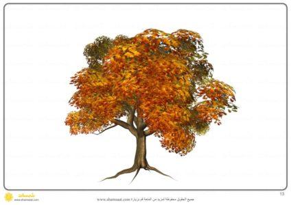اخلاف شكل الشجرة في الفصول الاربعة 2