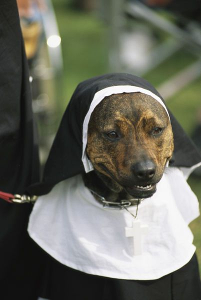 Funny Dog Dressed As A Nun Pet Costumes Dog Halloween Costumes