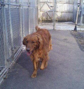 Boarding - Liberty Canine Care Center, LLC