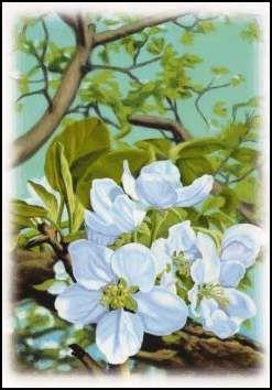 Kartki Pocztowe Plants