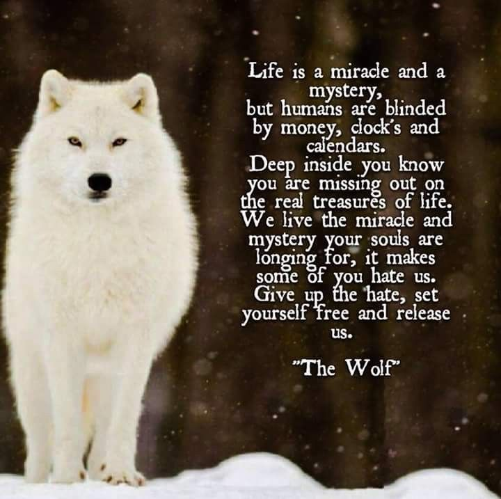 Wolves Wolfs Wolves Wolfs Pinterest Wolf Quotes Wolf And Quotes