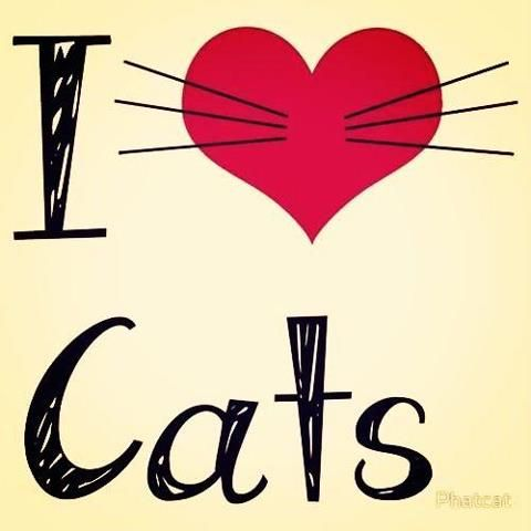 <3 Cats!