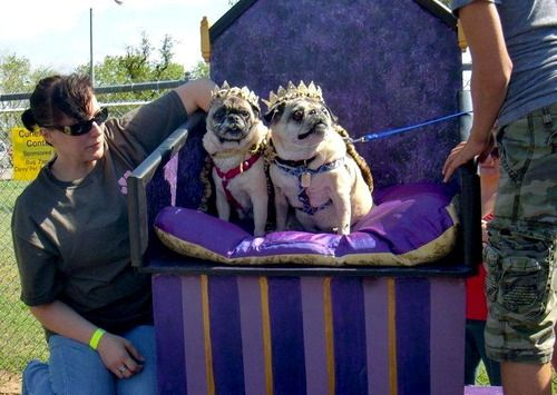We Can Workit Onour Own Royalty Pugs