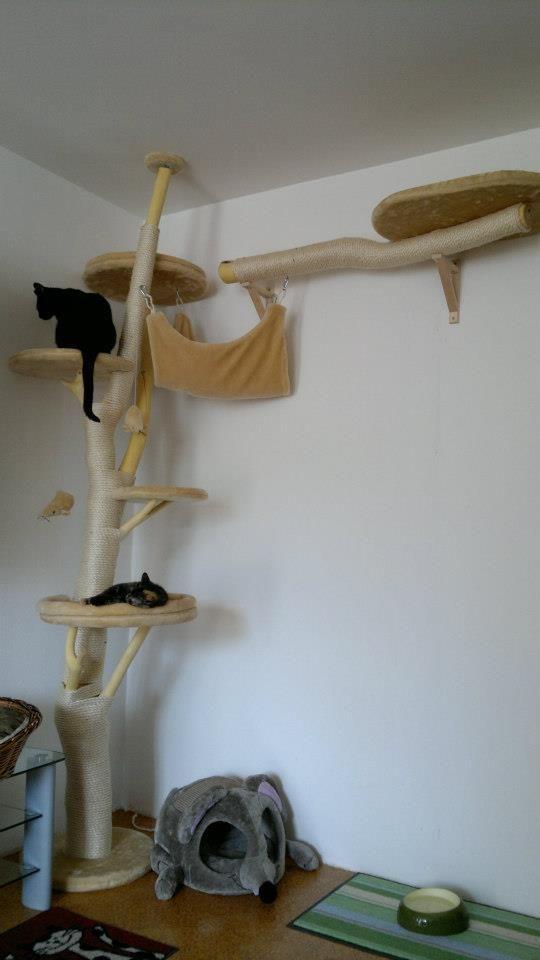 Katzen Kratzbaum Bauen Katzenmöbel Kratzbaum Katze