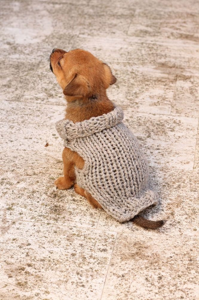 Free Knitting Pattern For A Puppy Sweater Knitting Pinterest