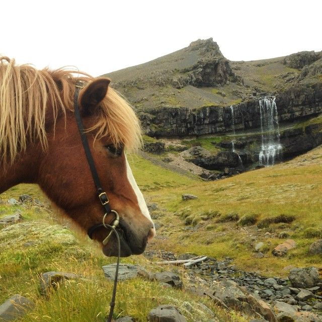 The Icelandic Horse brings you closer to nature. It is an absolute must to go for a horseback ride, when you travel in Iceland, and why not combine it with sightseeing? It will take you to the most amazing sights in Iceland, where can you can see a lot of stunning waterfalls, memorizing lava fields, elf stones, and much more. Visit a horse farm or horse park, from where you can explore the Icelandic nature.
